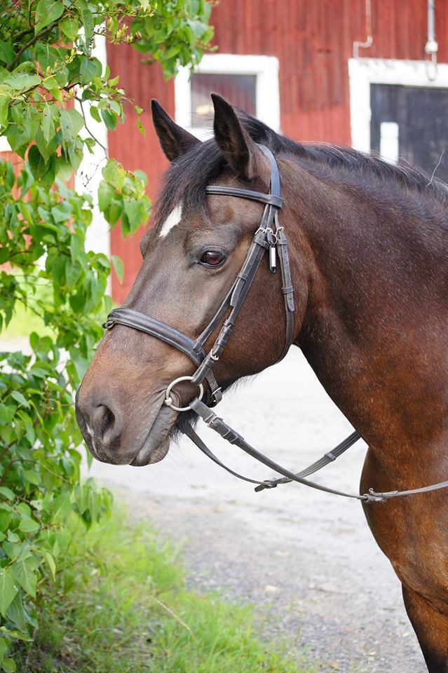 stressad häst tillskott